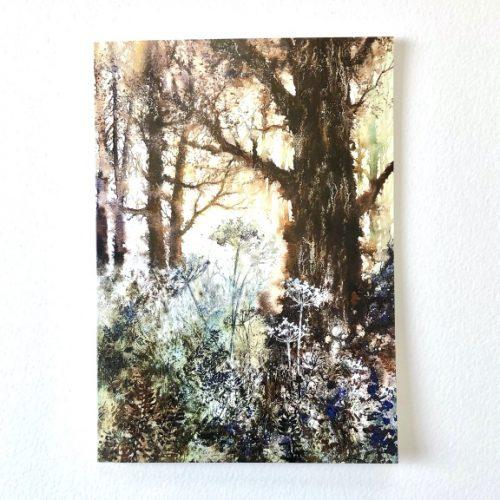woodland walk low res